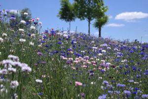 prairiewildflowersNebraska